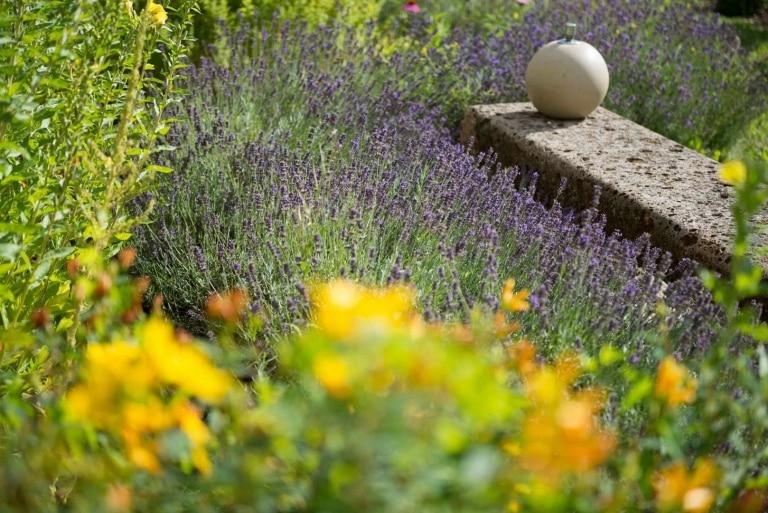 Lavendel und andere Kraftpflanzen Hotel Larimar
