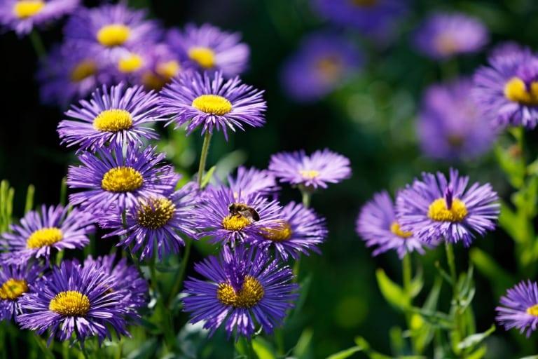 Bunte Blumen im Larimar Gartenparadies