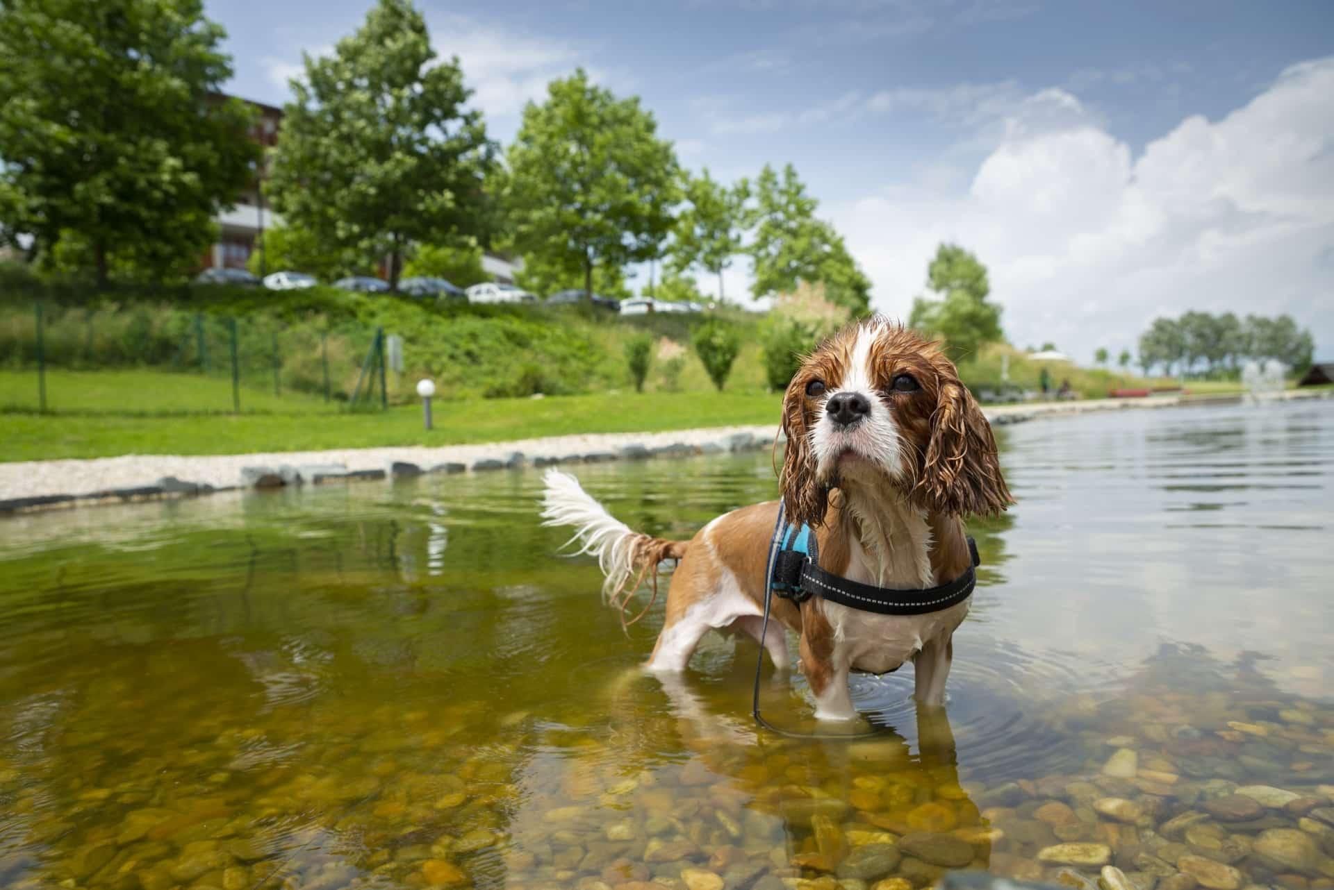 Hotelhund Toni im Hunde-Schwimmteich