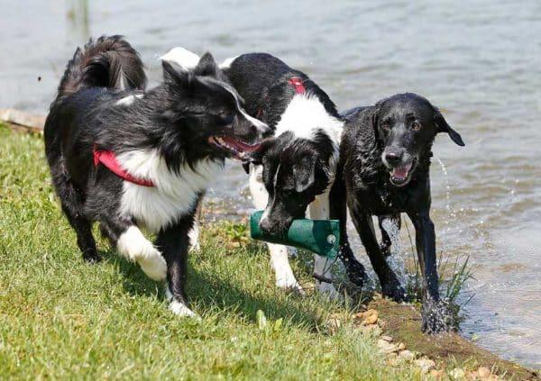 Hunde plantschen im Larimar Teich