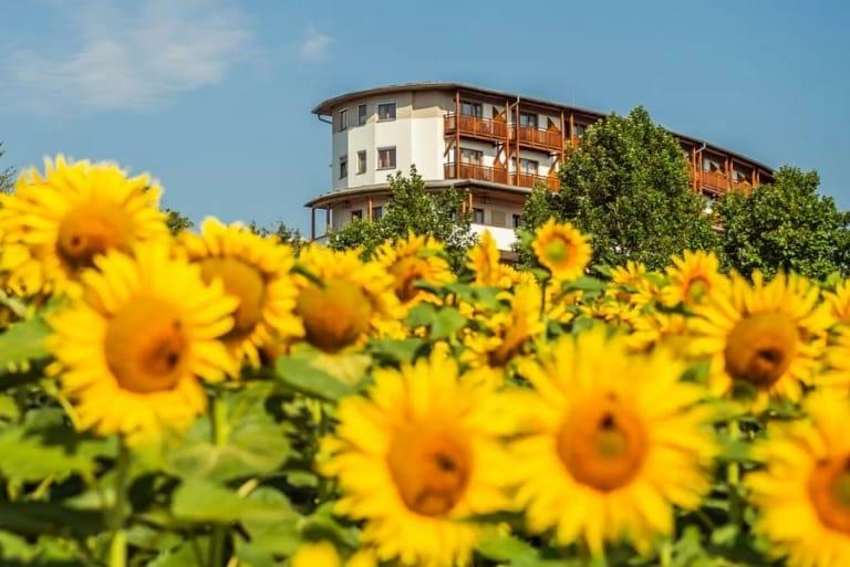 Anischt aus dem wunderschönen Sonnenblumenfeld