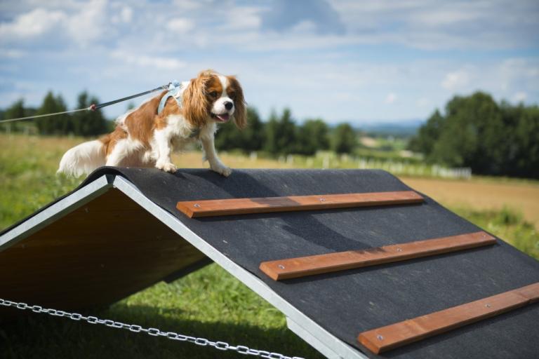 Hürden halten die Hunde gesund und gelenkig