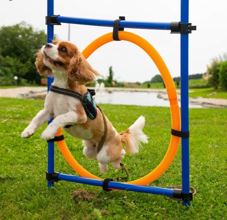 Agility-Parcours halten Hundegelenke fit im Hotel Larimar