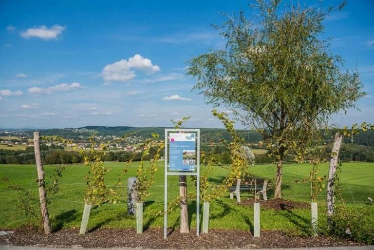 Walk of Wine - Weinregion im Südburgenland entdecken