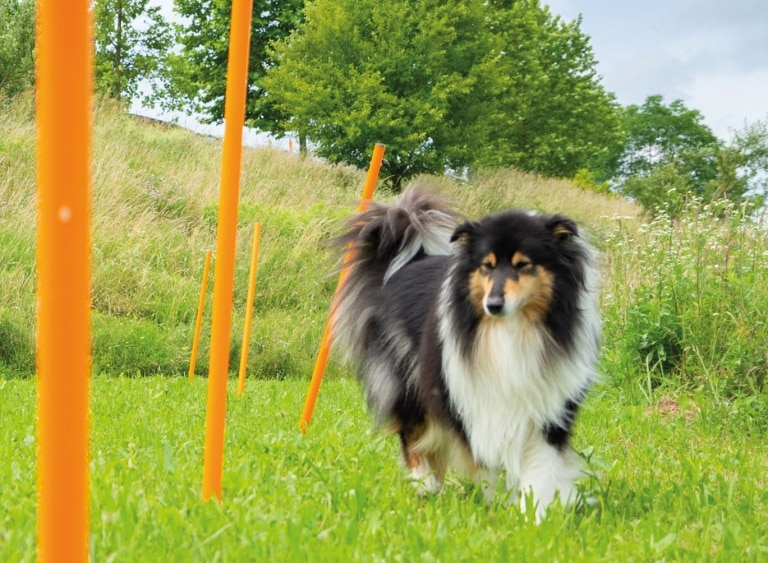 Hund-Agility-Parcours-Hotel-Larimar